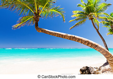 Coconut Palm trees on white sandy beach in Punta Cana,...