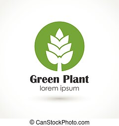 Baby plant - Vector illustration of a Green plant vector
