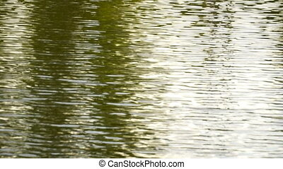 Lake waves,, green color from the shade of trees. HD video