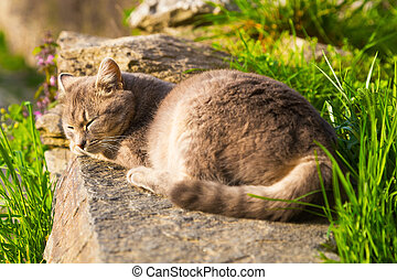 Ginger cat sleeping peacefully on a stone wall - Ginger cat...