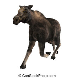 3D Rendering Female Moose on White - 3D rendering of a...