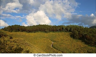 mountain - Time lapse Tung Bua Tong Mexican sunflower under...