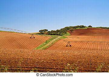 view on brown agriculture field and blue sky