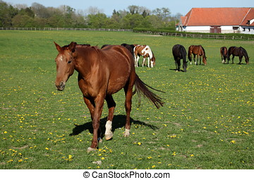 A Herd of Horses at a Horse Farm