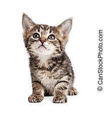 Cute Tabby Kitten Over White