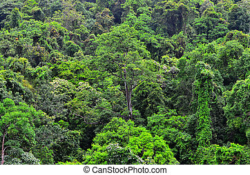 Aerial view of canopy Queensland Australia - Aerial view of...