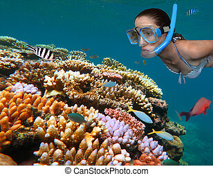 Young woman snorkeling - Woman snorkeling