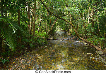 Landscape of a wild stream in Daintree National Park...