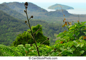 Mount Alexandra lookout Daintree National Park Queensland...
