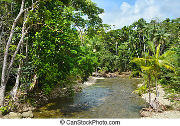 Landscape of a wild stream