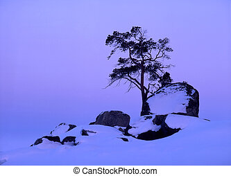 Lonely tree in sunset - Lonely tree on the top of snow...