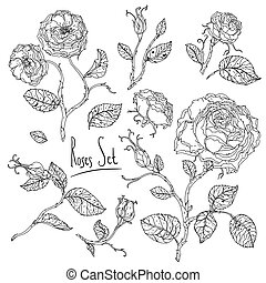 hand drawn wild roses set - Highly detailed uncolored...