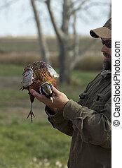 caçador, com, Um, Pheasnt,