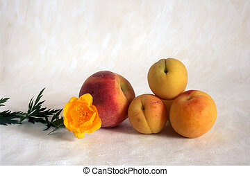 peaches with flower on painted background