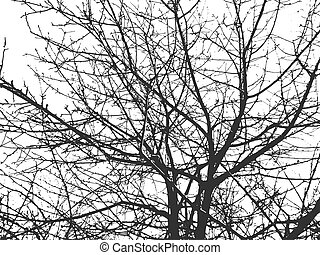 Vector silhouette of tree branches.