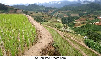 rice terraces - Rice terraces of Mu Cang Chai , Yen Bai ,...