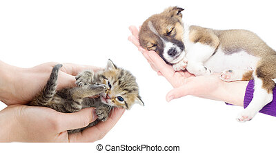 little puppy and kitten sleeping in the hands