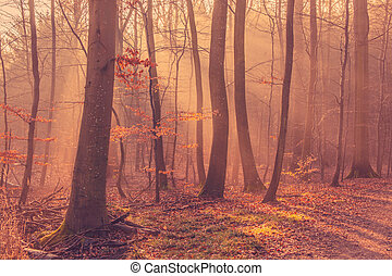 Sunrise in a the forest mist