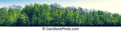 Green beech trees in panorama landscape