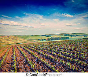 Rolling fields of Moravia - Vintage retro effect filtered...