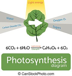 Photosynthesis diagram. Schematic vector illustration of the...