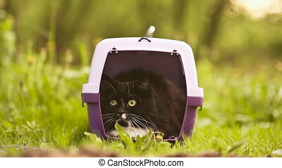 The cat is sitting in transporting animals on grass