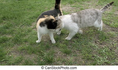 Two cats in love fondly tenderly touching walking - Two cats...