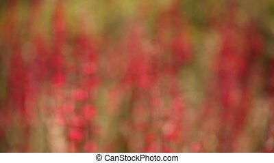 Blurry Flower Blossoms Background - Abstract Blurry...