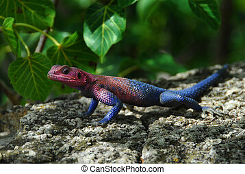 reptile - nice colored reptile that blends