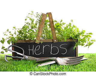 Garden box with assortment of herbs and tools