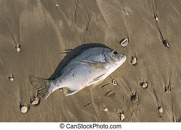 Dead fish on a seashore