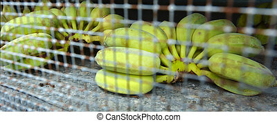 Raw bananas in a ripening cage in banana plantation in...