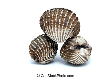 fresh cockles seafood on white background
