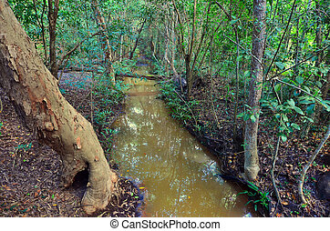 Landscape of a wild stream in Queensland Australia -...