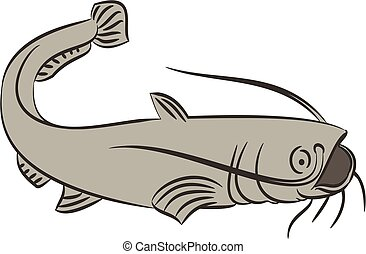 Catfish on white - Illustration of a catfish