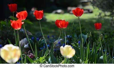 Spring garden with tulips - Spring garden with red tulips...