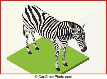 Zebra flat vector isometric 3d - Zebra isometric flat...