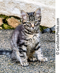 tabby kitten - a small cat sits and waits for their food
