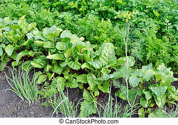 vegetable garden - organically cultivated various vegetables...