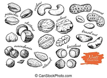 Vector hand drawn nuts set. Engraved collection.