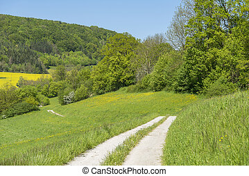 field path at spring time