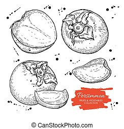 Vector hand drawn persimmon set. Engraved collection.
