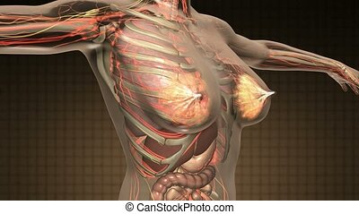 science anatomy scan of human body with internal organs
