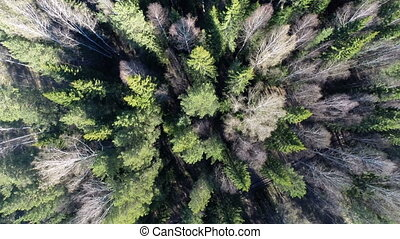 View of forest in summer. aerial view - view of forest in...