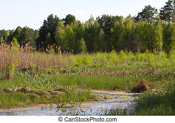 Panorama river with reed on northern part of Ukraine, Sumy...