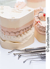 Teeth molds with basic dental tools on a bright white table...