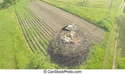 Storks nest with chicks and parents Aerial View - Storks...