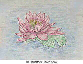 water lily - flower of lily