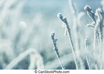 Frozen grass in the mountains