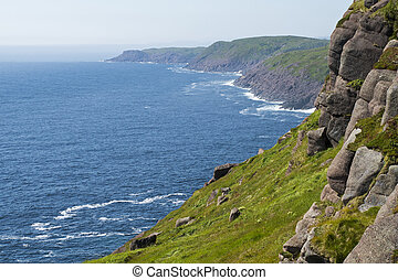 Rocky Atlantic Ocean coast - Rocky coast in Cape Spear,...